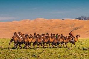 Gobi desert, Land of Dinosaurs